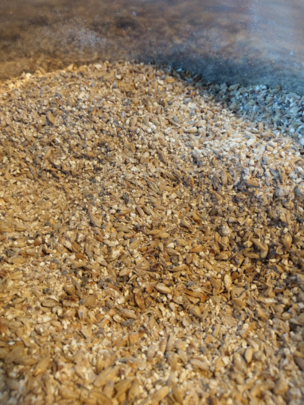 A close up of mixed malted barley prior to mash in