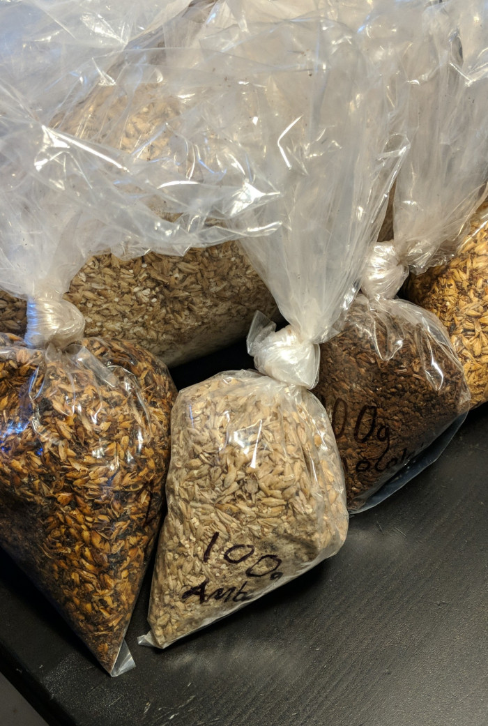 Plastic bags containing various malted grains, colours ranging from pail beige to dark brown - too much plastic!