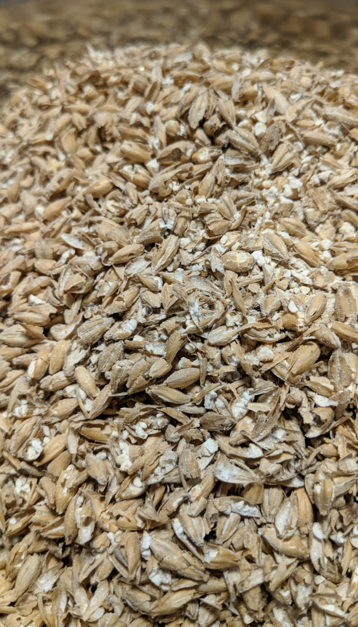 Golden Promise pale ale malted barley grains in a stainless steel pot